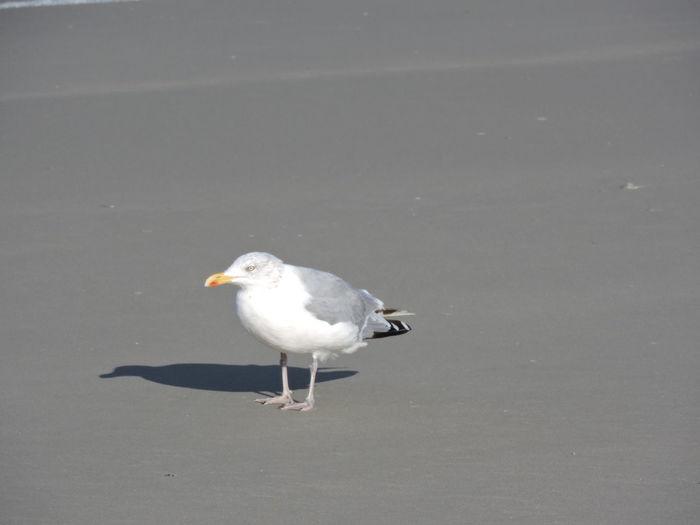 St. Peter Ording Nordseeküste Animals