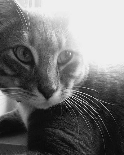 Momiji My Kitty 😍 My Love Enjoying Life Black And White My Boyfriend Is My Cat EyeEm Best Edits In The Window Sunlight ☀ The Smell Of Spring Taking Photos
