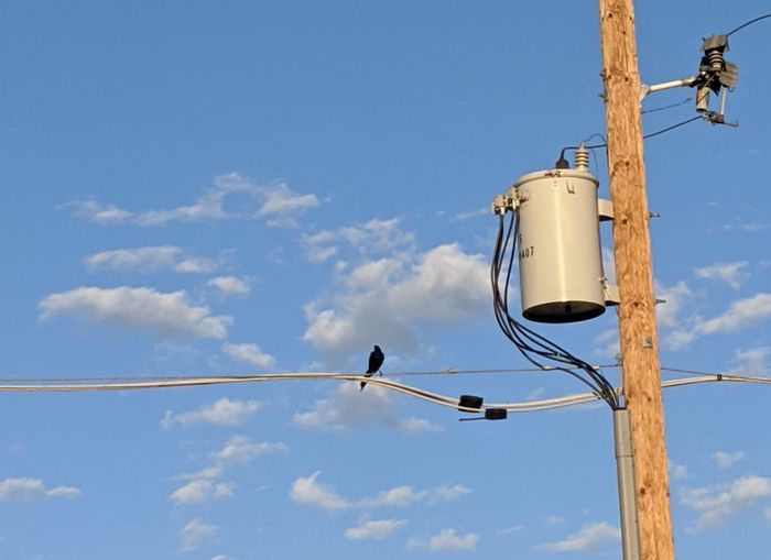 Low angle view of black bird perching on power cable against blue sky and clouds