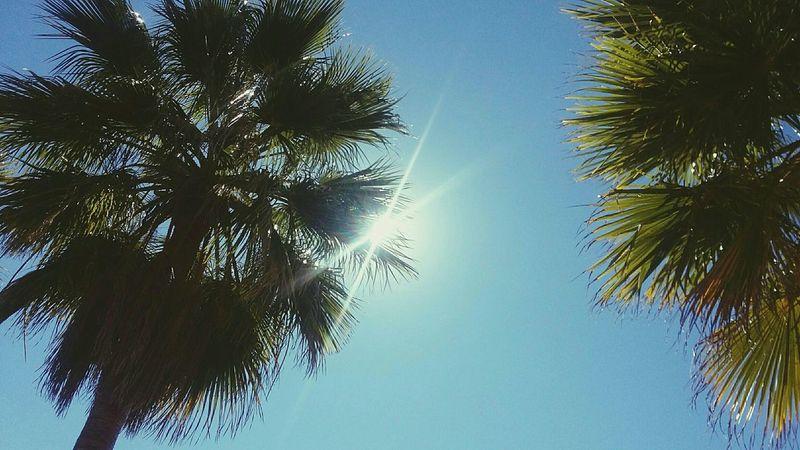 Palmeras Sky Blue Sky  Sky_collection Sol