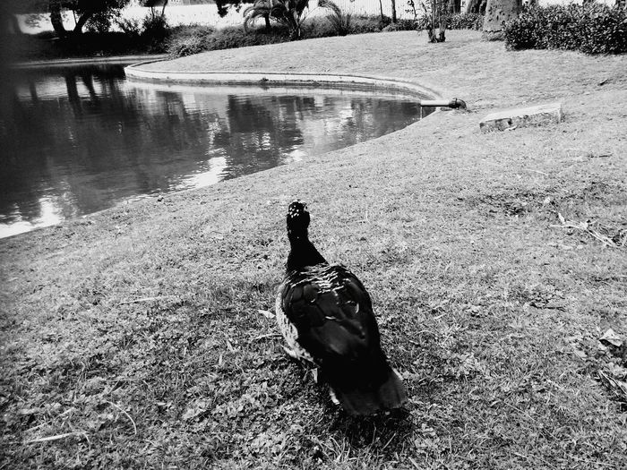 Lisbon Lisboa Jardim Do Campo Grande February2015 Nature Blackandwhite Nature Photography Animal_collection