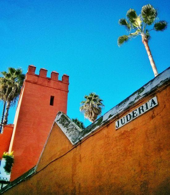 Detalles de Sevilla . Andalucía SPAIN Urban Landscape Perspective My Neck! Lookingup
