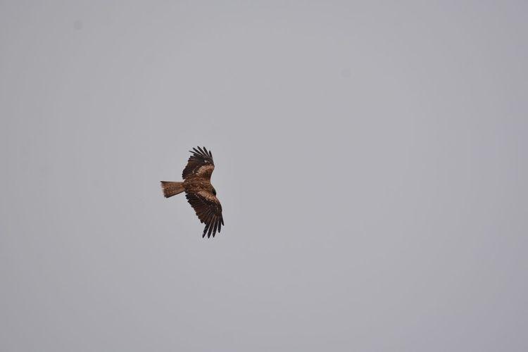 Animals In The Wild Animal Themes Animal Animal Wildlife Flying Bird Vertebrate