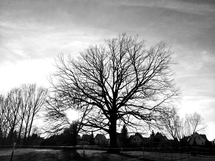 Blackandwhite Unforgettable ♥ Unforgettable Moment Unforgettable Black And White Black & White Sunlight Tree Sky Cloud - Sky Bare Tree Dead Plant Single Tree