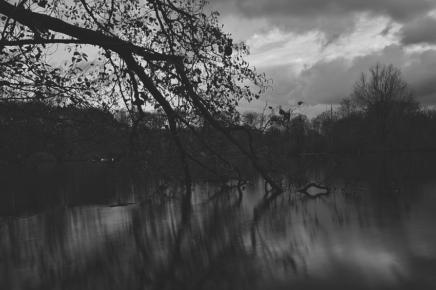 Nature Water Long Exposure Langzeitbelichtung Showcase: November Bnw Reflection Trees Tree_collection  Ewaldsee Water Reflections