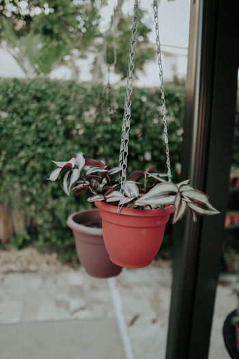 Close-up of swing hanging on potted plant at yard
