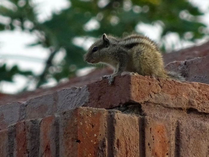 Squirrels Animal Themes Animal Wildlife Animals In The Wild Chimney Closeup Day EyeEmNewHere Garden Mammal Nature Nature Photography No People One Animal Outdoors Rakeshtiwari Rooftop Squirrel Treetrunk Wildlife & Nature Wildlife Photography