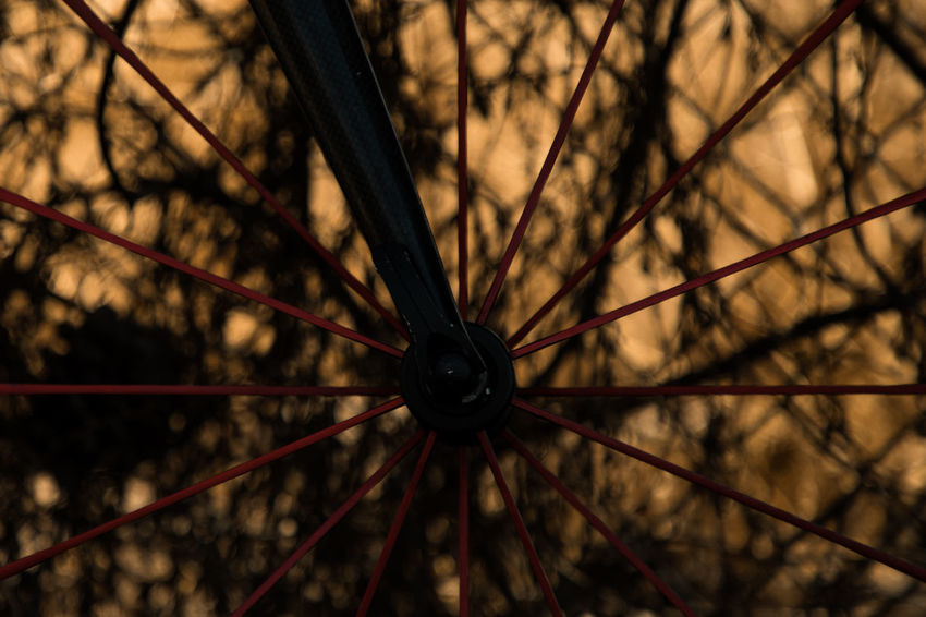 placed in the middle Beautiful Nature Red Sunny Wheel Bicycle Bike Brown Brushwood Close-up Day Focus On Foreground Nature No People Outdoor Outdoors Racing Bicycle Road Bike Selective Focus Spoke Sport Warm