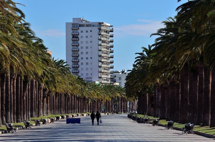Passeig Jaume I de Salou Walking Palm Tree Passeig Jaume I Salou