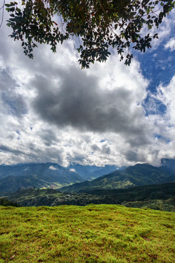 Portrait view of a rural valley near Salento, Colombia. Cloud Colombia Farm Hiking Palm Pasture Quindío Rural Tree Trip Andean Cauca Colombian  Countryside Forest Hike Jeep Landscape Outdoors Quindío Salento Tolima Tree Trek Wax