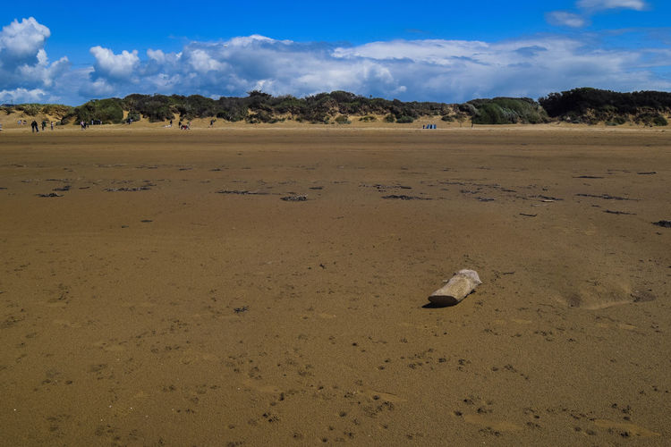 Nature Sky Land Scenics - Nature Tranquil Scene Beach Beauty In Nature Tranquility Day Sand Environment Landscape No People Outdoors Climate Arid Climate Log On The Beach Log On The Sand Space For Text Space For Copy Cloud - Sky Non-urban Scene Sunlight Remote Horizon Over Land