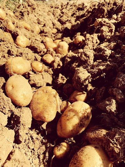 Agriculture Harvest Potatoes EyeEm Selects Nature Land Full Frame No People Sunlight High Angle View