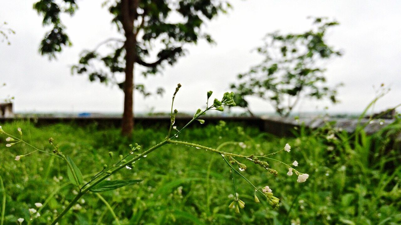 growth, nature, focus on foreground, green color, drop, plant, grass, no people, water, outdoors, beauty in nature, close-up, fragility, freshness, leaf, day, sky