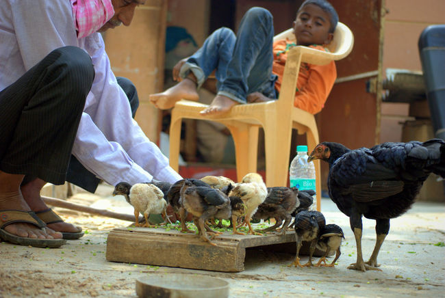 Daily life. Bird Chicks Daily Life Daily Life Snap Dailylife Day Hen Outdoors People Togetherness