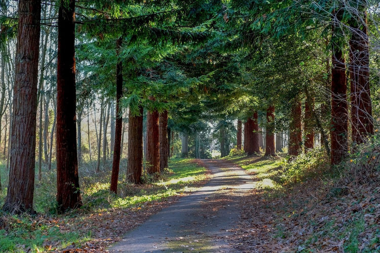 Beauty In Nature Day Forest Forestwalk Fur Tree Landscape Nature No People Outdoors Pathway Road Scenics The Way Forward Tree Tree Lined Tree Lined Path Woods