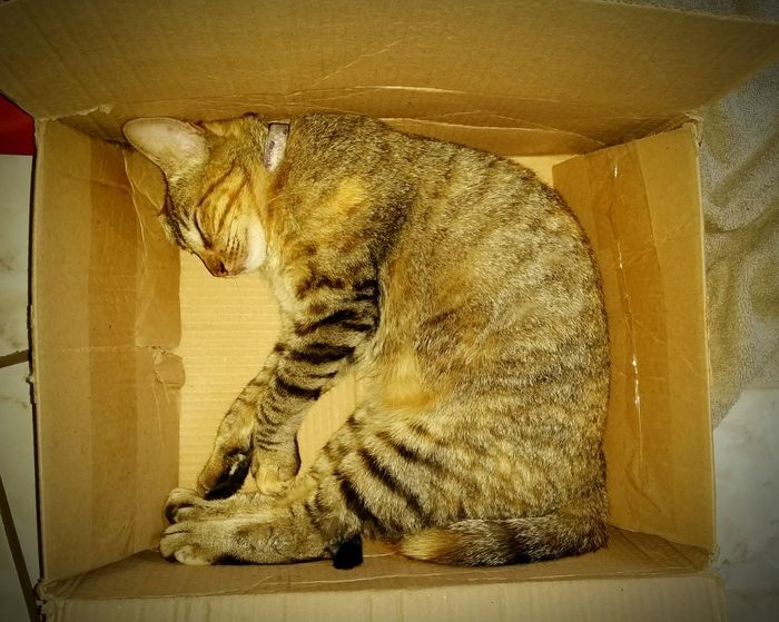 Cat in box ... Lolla in box Animal Themes Domestic Cat Cat Lovers Lolla Cats Of EyeEm Amodemais Pets Portraits