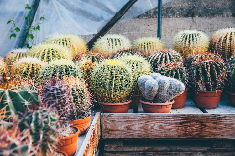 Agriculture Beauty In Nature Cacti Cactus Cactus Nature Plant