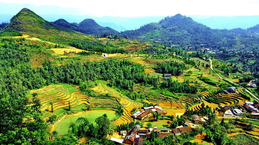 Hà giang, vietnam Nature Growth Mountain Beauty In Nature Sky Close-up No People Landscape Green Color Outdoors Scenics Day Tree Backgrounds