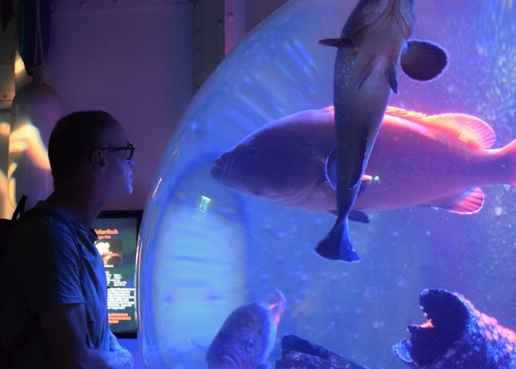 Side View Of Man Looking At Fishes Swimming In Aquarium