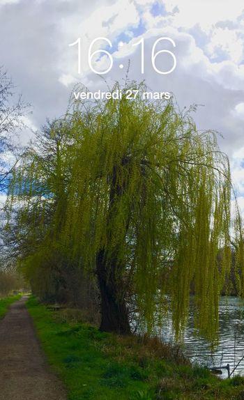 16H16😊✋😚🇫🇷 Charente France Nature Heure HEURE POLARIS Clock CIELFIE Arbre