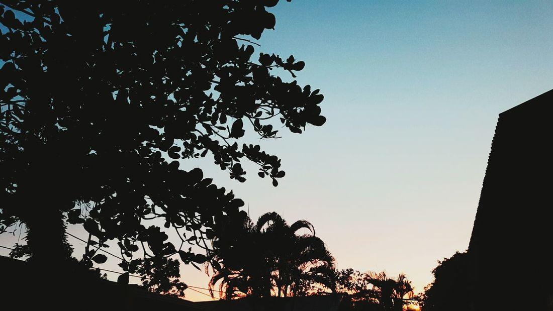 Skyporn Sky And Trees Skylove Jurphoto