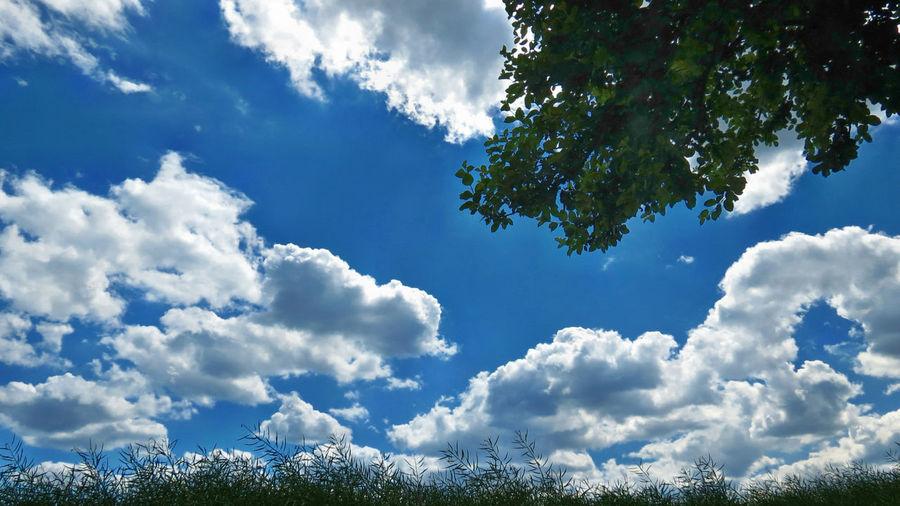 Bald ist es vorbei, heute ist Herbst Anfang. Today is beginning of autumnBeginning Of Autumn Cloud - Sky Landscape