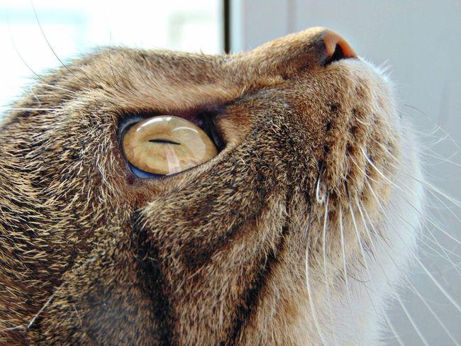 кот котэ Котик няша😺 усатик пупсик