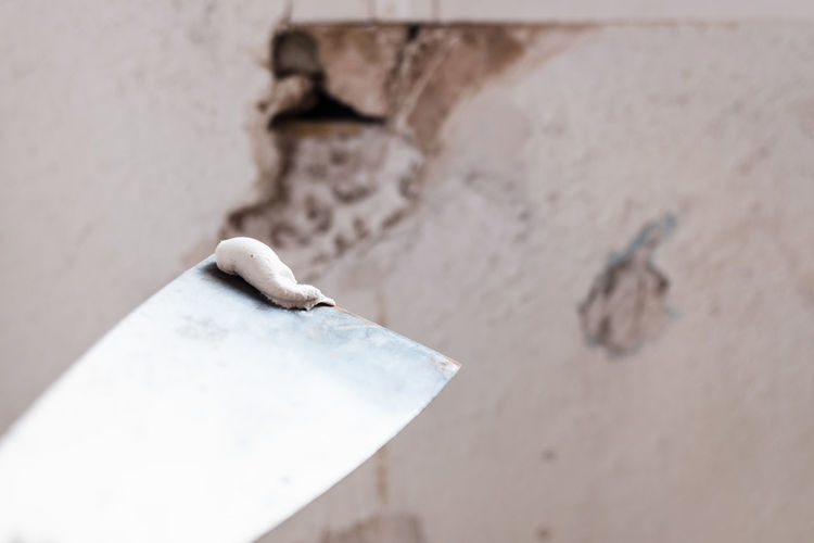 Close-up of a lizard on wall