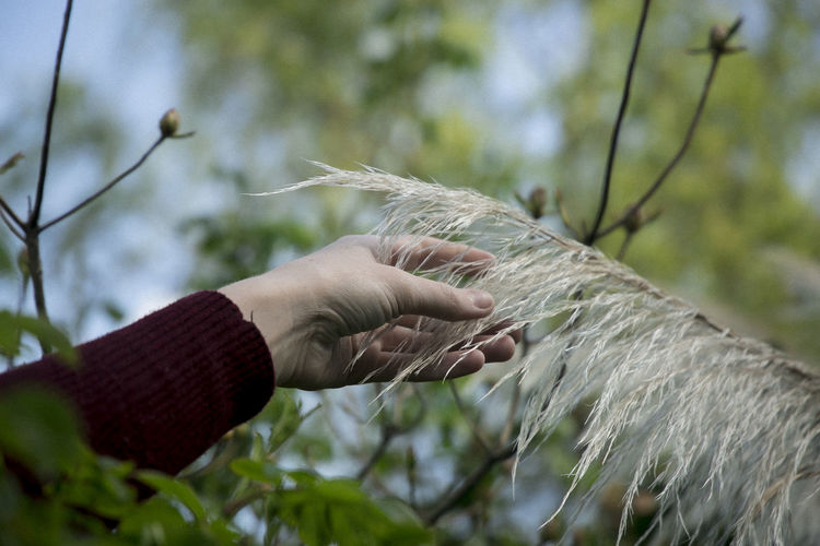 Close-Up Of Hand Touching Plant