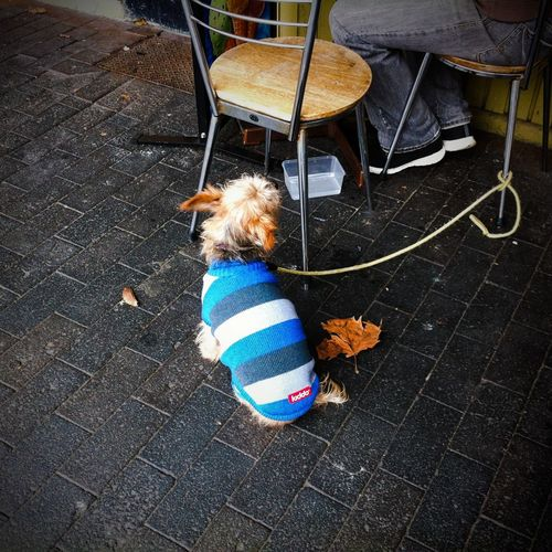 Missing the cool weather Australia Bluemountains Cold CoolWeather Dog Dogclothes Knitwear Sydney The Street Photographer - 2016 EyeEm Awards Feel The Journey Always Be Cozy
