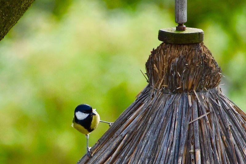 Bird Animal Themes Outdoors One Animal Nature Nikonphotography Nikond7200 Nikkor55_300 Out Of Camera Jpeg