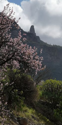 View of cherry tree by mountain against sky