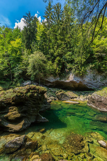 Traunfall Beauty In Nature Flowing Flowing Water Forest Green Color Growth Lake Nature No People Non-urban Scene Oberösterreich Outdoors Plant Rock Rock - Object Scenics - Nature Shallow Solid Stream - Flowing Water Tranquil Scene Tranquility Tree Upperaustria Water