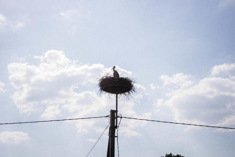 Low angle view of nest on electricity pole