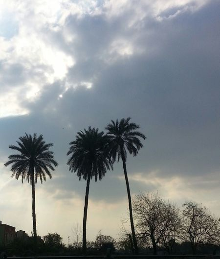 Palm Tree Sky Cloud - Sky Beauty In Nature Nature Countryside Beautiful Sky Beautiful View No People Peacefull Egypt ❤