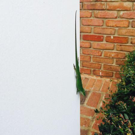 Gecko Taking Photos