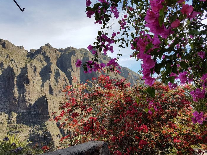 Teneriffa Masca Beauty In Nature Tree Nature Flower Growth No People Day Outdoors Branch Sky Scenics Mountain Freshness
