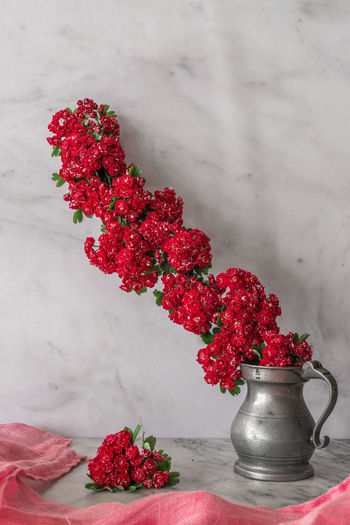Close-up of red potted plant on table against wall