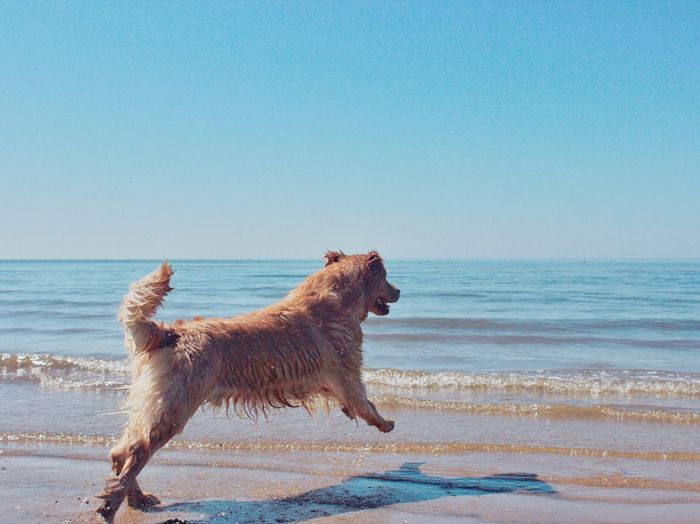 My Dog Dog Goldenretriever Check This Out Sea And Dog Taking Photos Seaside Play With My Dog Taking Photos OpenEdit Checking In Beautiful