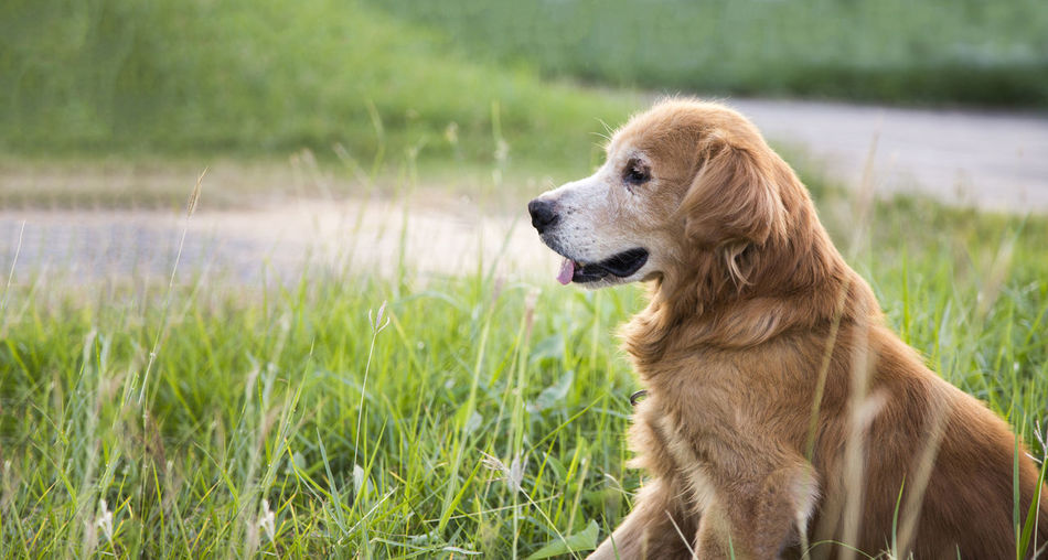 View of a dog looking away