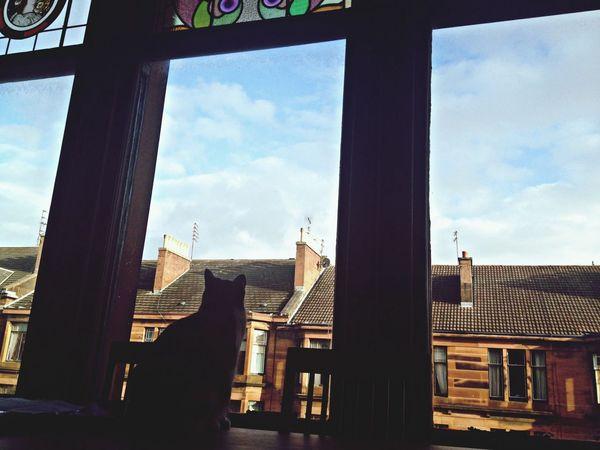 Cat Window Afternoon Sun