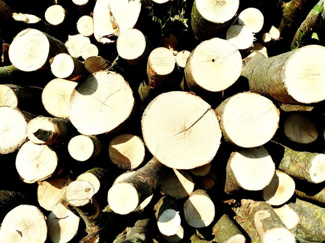Forestry Industry Woodpile Backgrounds Stack Full Frame Timber Pattern Log Heap Close-up Deforestation Firewood Arrangement Environmental Damage Lumber Industry Fossil Fuel Fire Pit Axe Bonfire Fuel Pump Refueling Gasoline Cooling Tower Gas Station Environmental Issues Tree Stump Forest Fire Tree Ring Pile Campfire