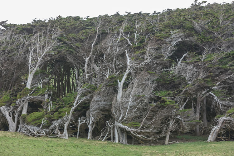 Gnarly trees in the wind EyeEmNewHere Gnarled Gnarly Trees Beauty In Nature Catlins Day Grass Growth Landscape Nature Newzealand No People Outdoors South Island Wind
