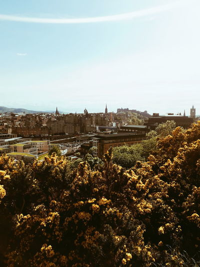 Edinburgh Cityscape City Edinburgh Scotland Gorse Yellow Flowers Urban Urban Skyline Edinburgh Skyline Urban Nature Sky