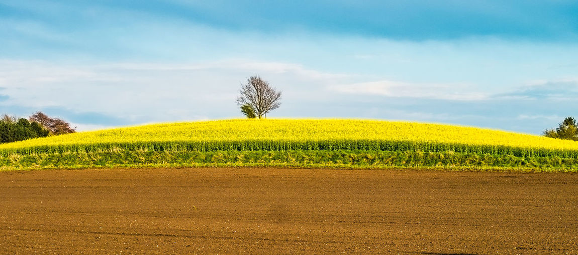 Agriculture Brown Color Cloud - Sky Environment Field Green Color Green Yellow Brown Orange Land Landscape No People Plant Plantation Rural Scene Sky Tranquility Tree Tree Alone Yellow