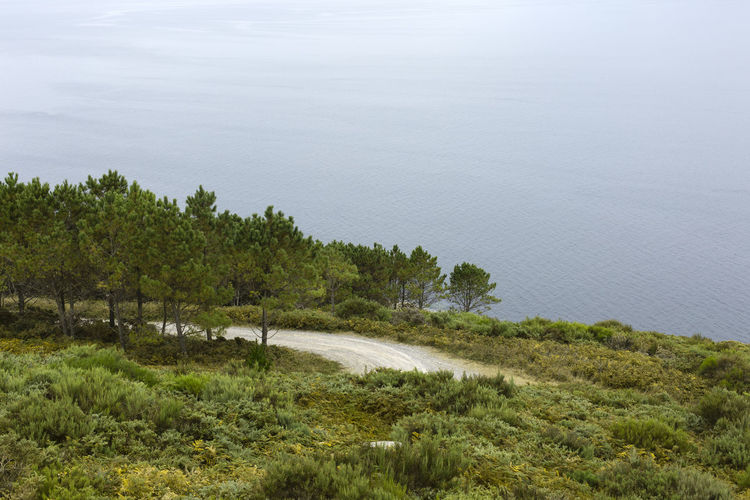 Scenic view of sea and trees