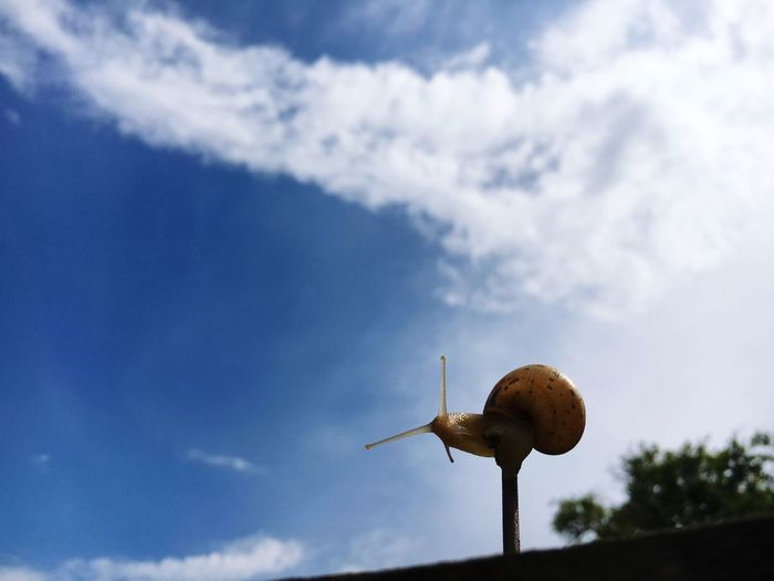 Snail against blue sky and clouds