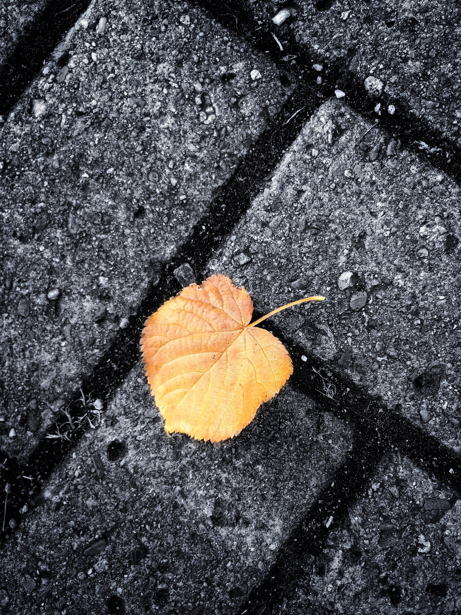 asphalt, high angle view, street, season, road, autumn, leaf, transportation, road marking, wet, change, fallen, textured, close-up, outdoors, day, sidewalk, no people, dry, puddle