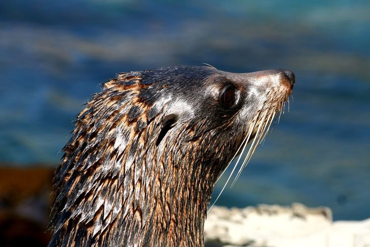 Animal Animal Eye Animal Hair Animal Head  Animal Head  Animal Nose Animal Themes Animals In The Wild Beauty In Nature Day One Animal Sea Seal Wildlife Yung Seal Zoology