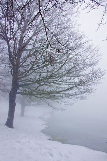 Bare Tree Beauty In Nature Branch Cold Cold Temperature Covering Day Fog Growth Idyllic Lake Maullazzo Landscape Nature Non-urban Scene Outdoors Remote Scenics Sky Snow Tranquil Scene Tranquility Tree Tree Trunk Weather Winter